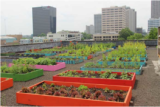 Green Rooftops For Healthy Cities